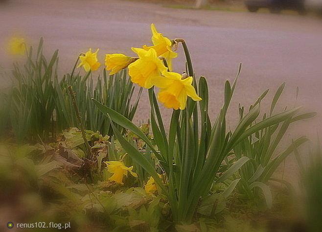 Wiosennie tak........