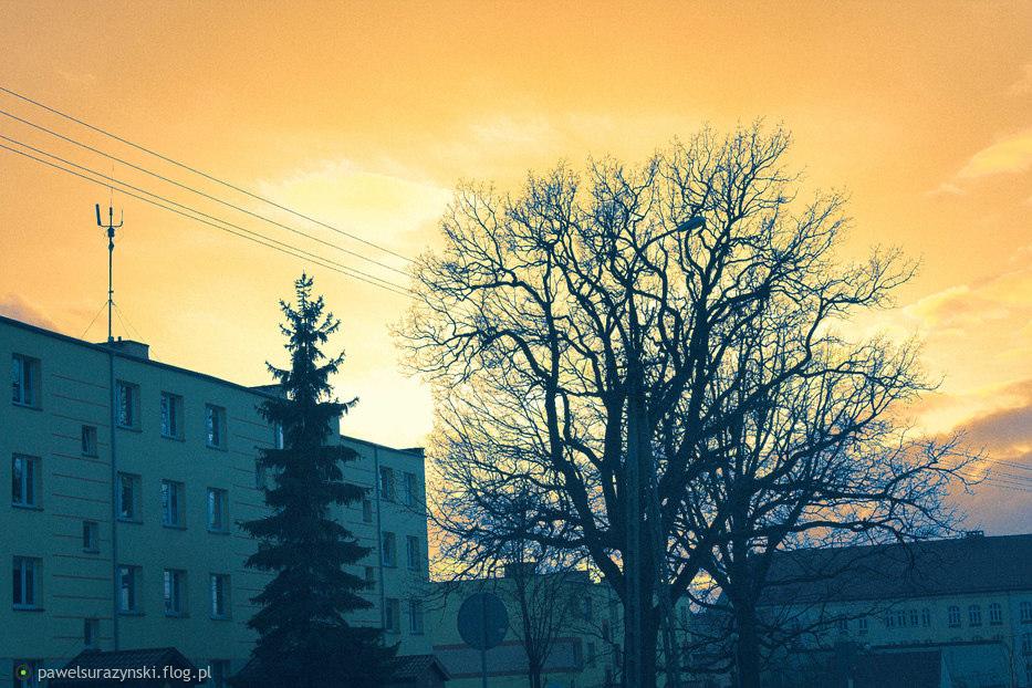 miasto drzewa i kolory