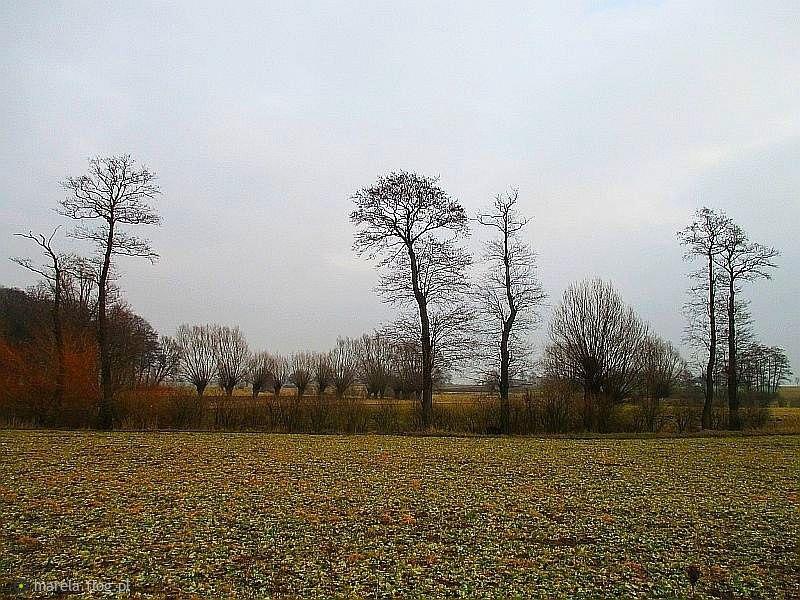 Zimowe drzewa...