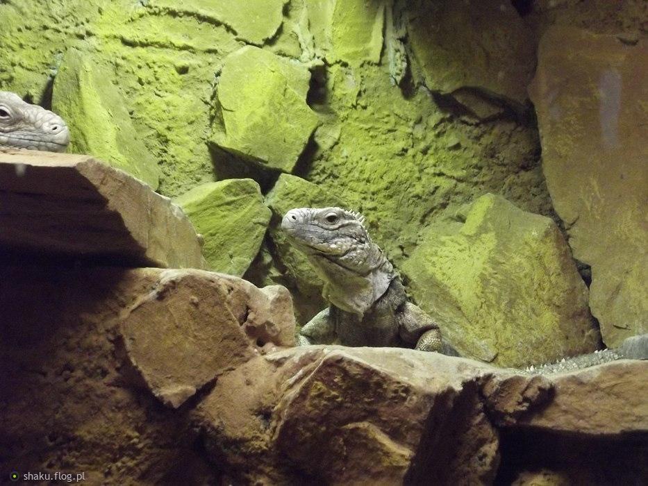 krokodyl trochę