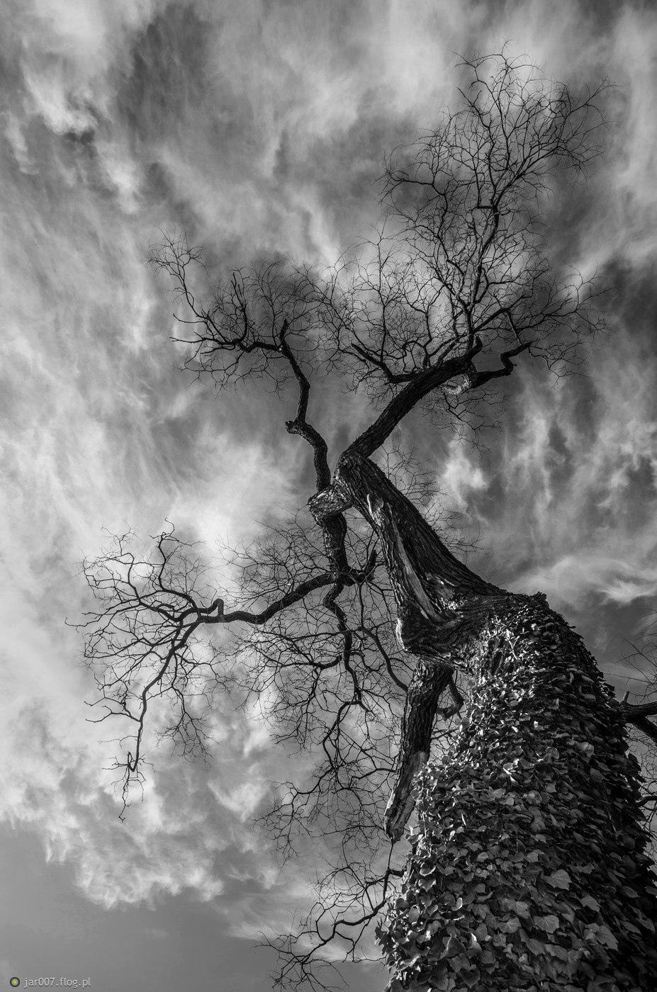 Dramatyczne drzewo