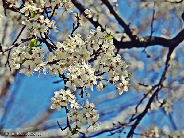 http://s18.flog.pl/media/foto_middle/10857931_kwieciscie.jpg