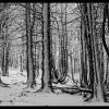:: dzisiaj....w Górach Sowic<br />h...w drodze na Kalenicę.<br />..