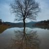 Tree :: Nad Solińskim Jeziorem.