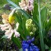 Wiosenne ozdoby w ogródec<br />zku.