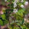 Leśne kwiaty ::