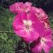 Kwiaty, kwiatki, kwiatusz<br />ki :: Chciałam wrzucić zdjęcie <br />znów, ale co za dużo to n<br />iezdrowo, więc dziś kwiat<br />uszek. :) W oczeki