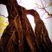Pomnikowe drzewa :: drzewa krzyczą ...M&amp;O<br />acute;WIĄ DO NAS PRZESTRZ<br />ENIE